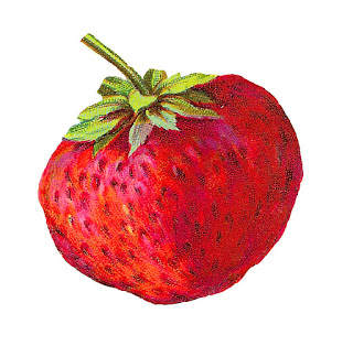 strawberry fruit image berry illustration download