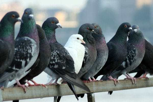 control aves zaragoza