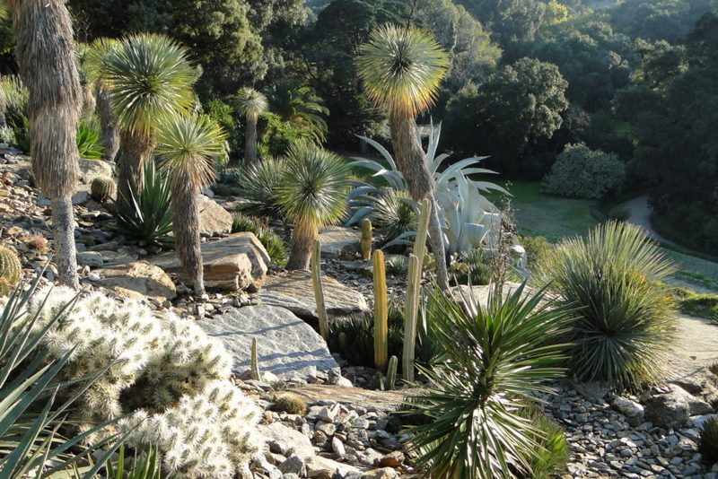 Jardín de rocalla. Jardín de América árida. Jardin plantas clima mediterráneo (Domaine du Rayol) diseño: Gilles Clement