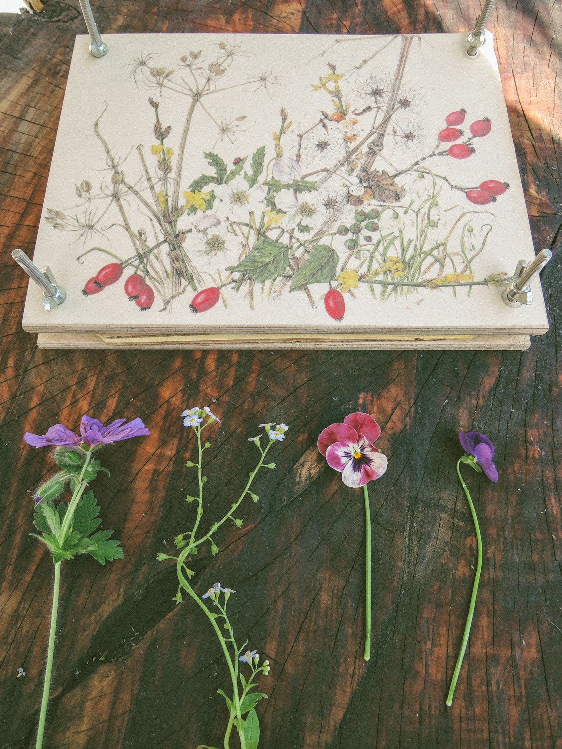 A Handmade Cottage How To Press Flowers Using Books Or Flower Press