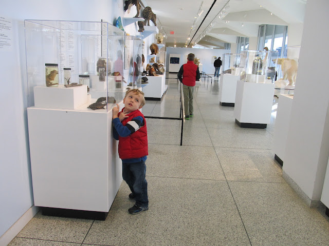 What to see at the NJ State Museum