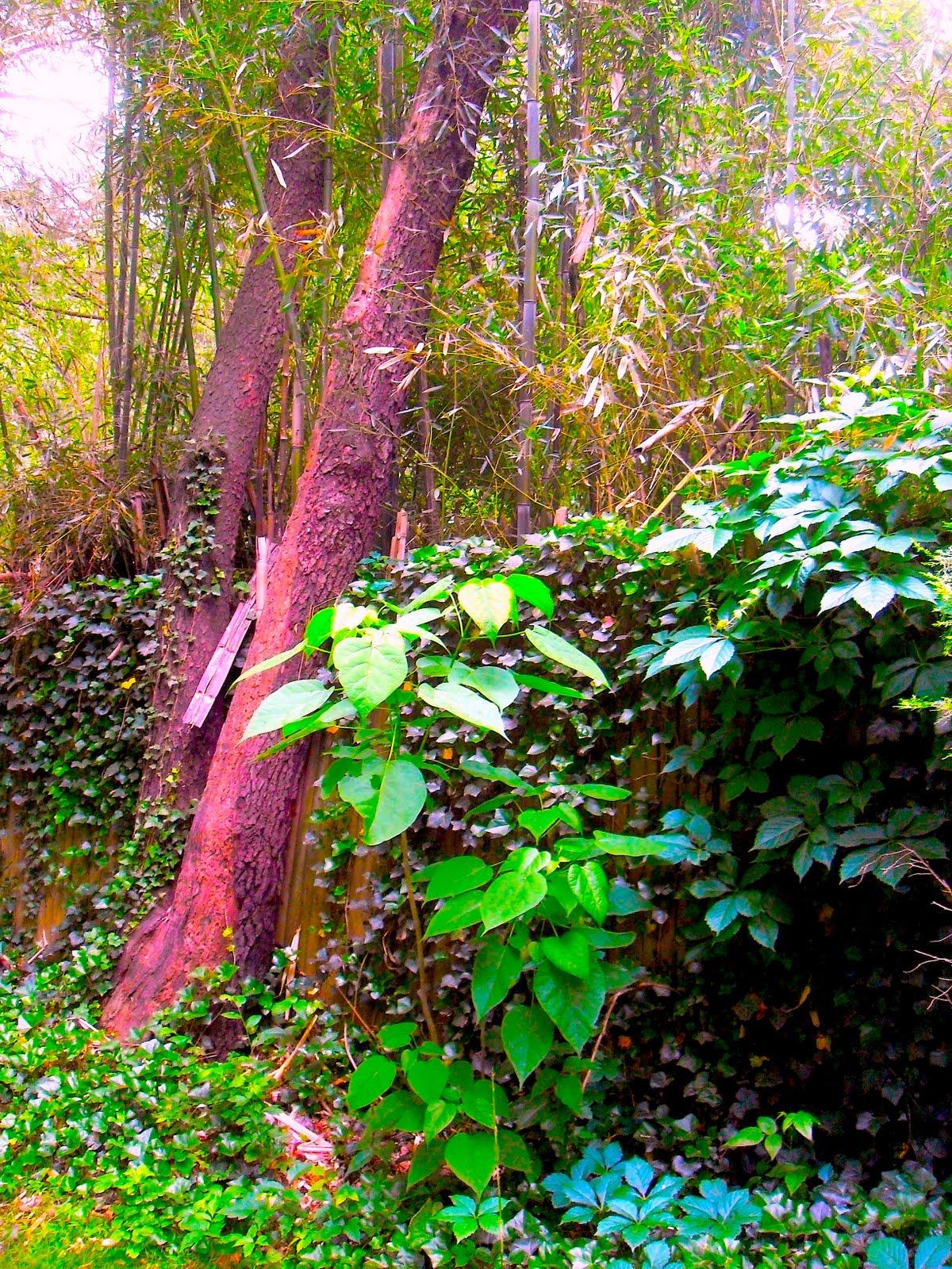 Nj Bamboo Landscaping: ART SKOOL DAMAGE : Christian Montone: Jodie's Equine