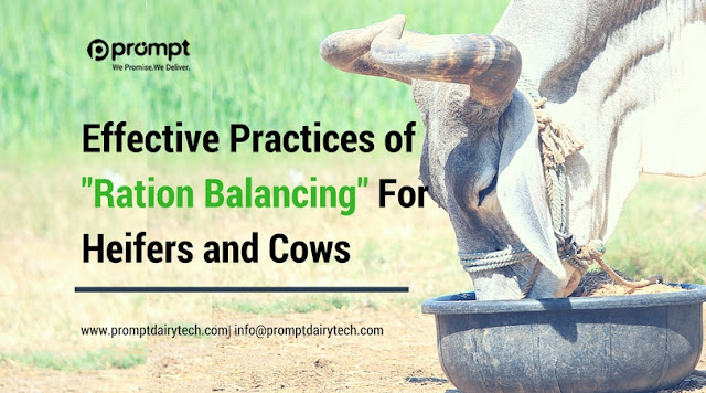 Effective Practices of Ration Balancing For Heifers and Cows