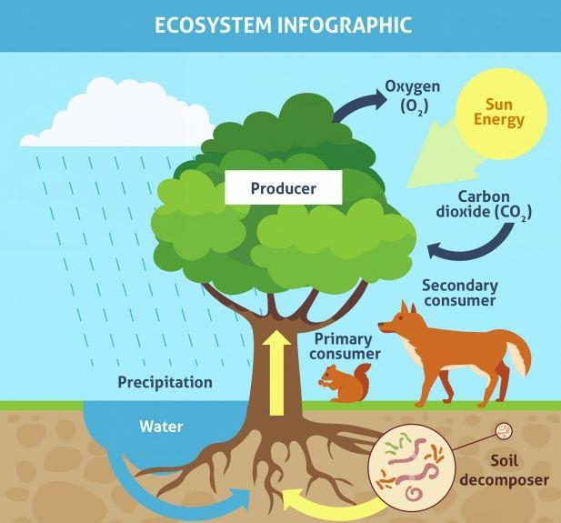 Belajar Tentang Ekosistem Darat dan Ekosistem Laut