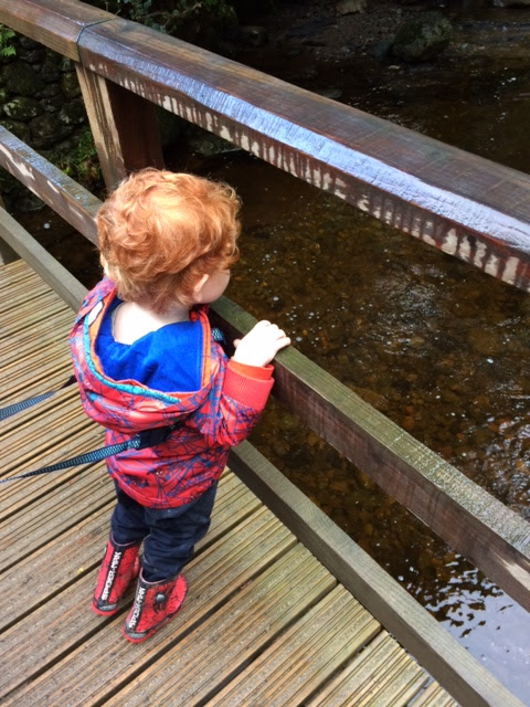 Toddler looking between the gaps of a wooden bridge at the river