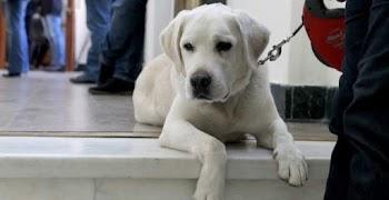 6013e224fa5 Έσερνε ζωντανό σκύλο με το αυτοκίνητό του! (ΑΚΑΤΑΛΛΗΛΗ photo)