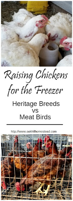 A comparison of Cornish cross and Rhode Island red birds for the freezer.