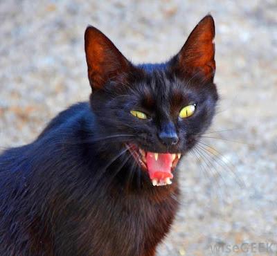 Mengusir & mencegah kucing liar
