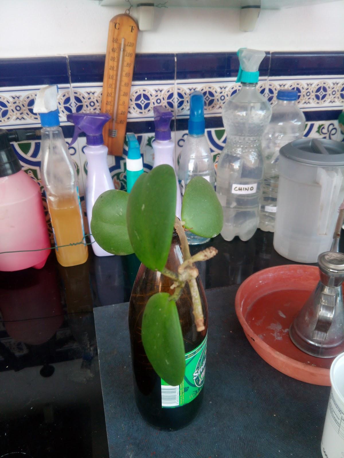 Las Hoyas Malagueas de Pepeuve