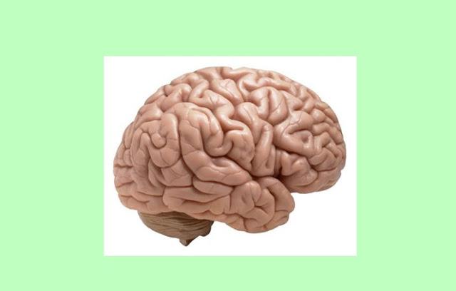 Pengertian Otak, Struktur Otak, Fungsi Otak
