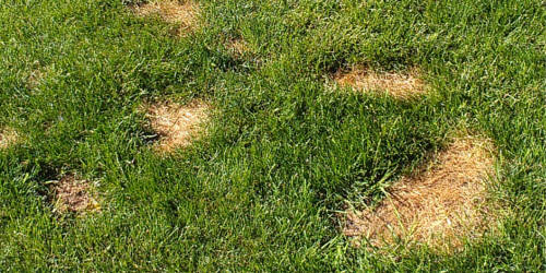 Best lawn care in boise idaho for How to fix dog urine spots on lawn