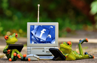 Frogs Accessing Facebook Via Electronic Devices