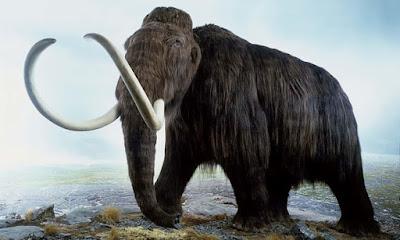Vương quốc cuối cùng của voi ma mút trước khi tận diệt