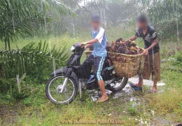 cara perawatan kelapa sawit yang benar