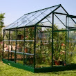 Learn How to Grow Roses in a Greenhouse