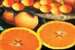 La vitamina C, presente en los cítricos