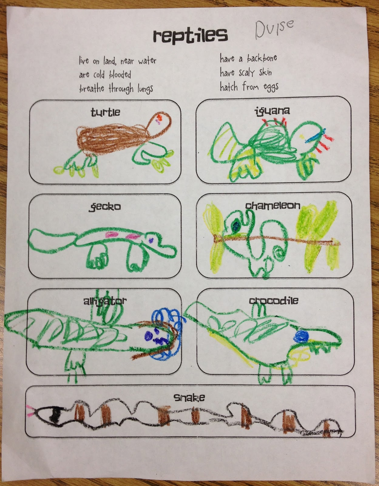 Little Miss Glamour Goes To Kindergarten Reptiles