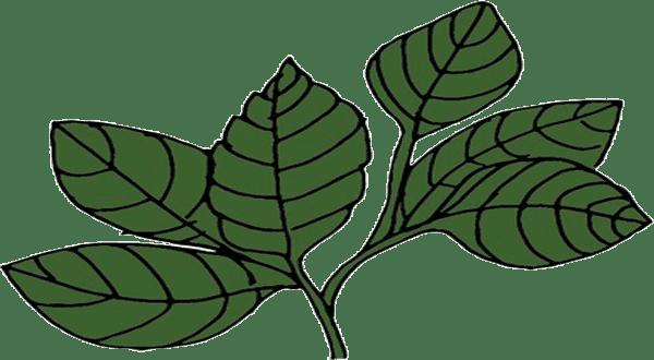 فوائد الطب البيل ( الحمص والخلنجان والرمان )