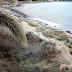 Гигантская паутина покрыла пляж в Греции (видео)