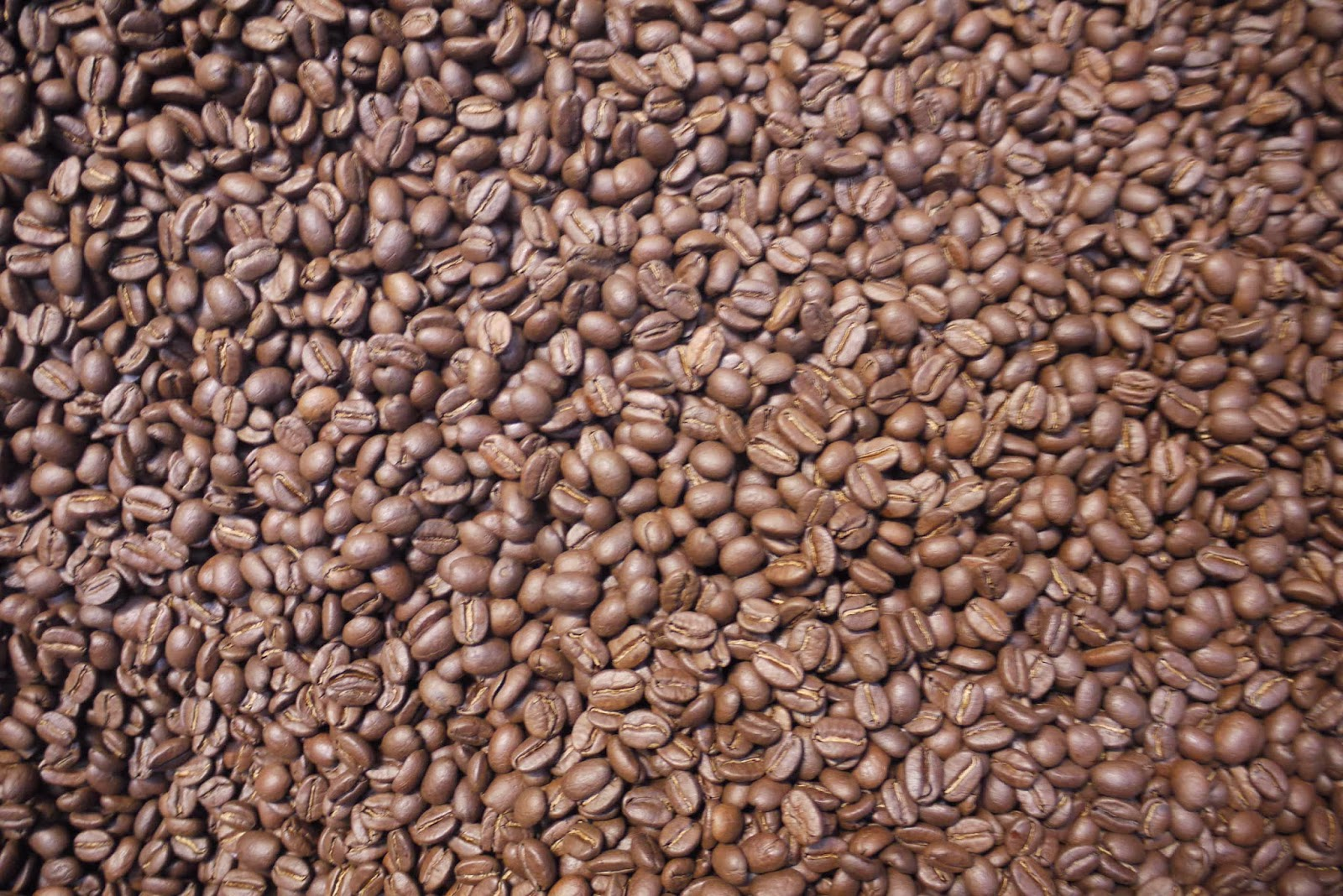 Coffee Arabica Coffee Bean Mike 39s Bogota Blog What 39s Wrong With Robusta
