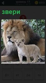 Два хищных зверя большой и маленький внимательно смотрят вперед