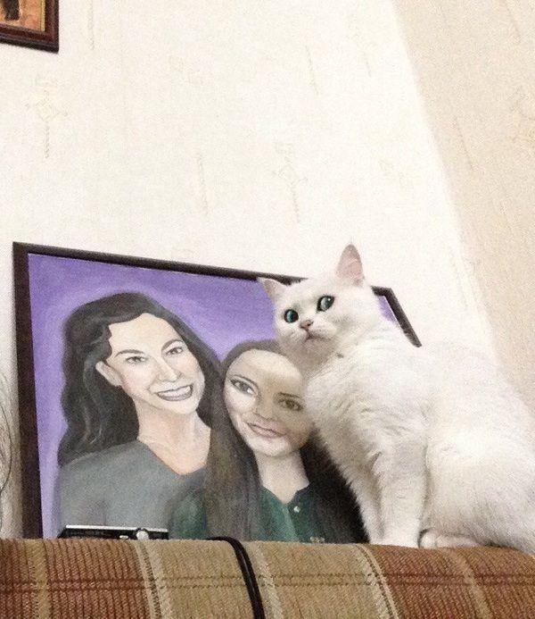 Funny cats - part 334, adorable cat photos, best cat images, cat gif