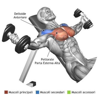 Dumbbell Incline Flyâs