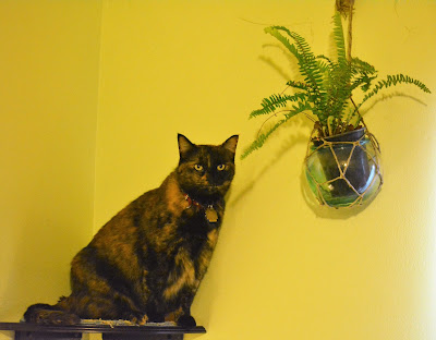 Cat sits on shelf beside hanging fern plant