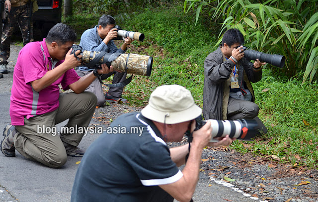 Bird photographers Sabah