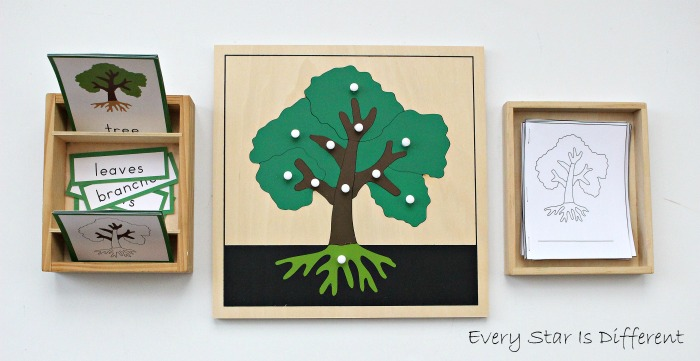 Parts Of A Tree Learning Activities And Free Printables