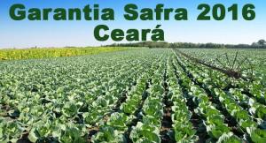 Portaria autoriza pagamento do Garantia Safra para Pacujá e mais 24 municípios cearenses