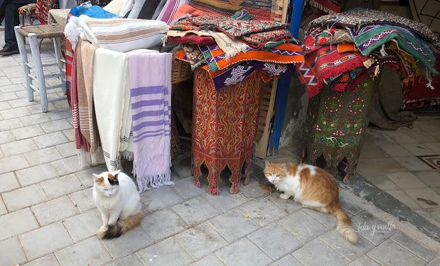 Gatos y más gatos