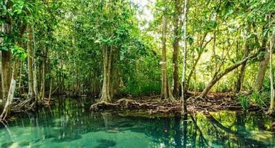 Hutan mangrove jenis hutan berdasarkan sifat tanah - berbagaireviews.com
