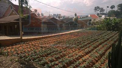 Đất rộng giá rẻ phường 9 Đà Lạt