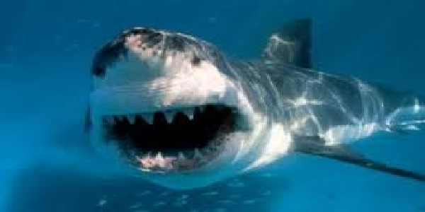 astryelia-me-shark-ke-hamle-me-mahilla-ki-halat-gambhir