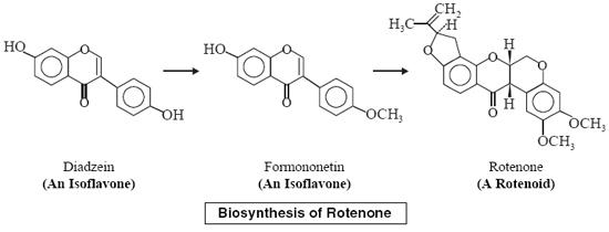 biosynthesis of rotenone a simple isoflavone called daidzein