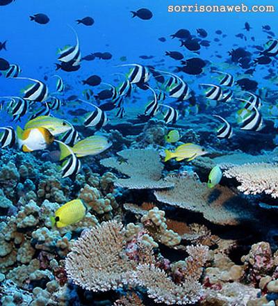 A vida marinha - Sorriso na Web