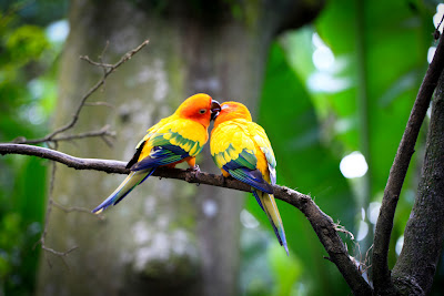 Indian Cute Love Birds Pictures Love Birds My Quotes