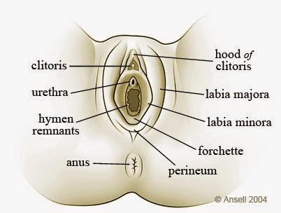 Liquids that surrounds the clitoris