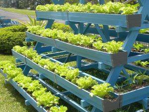 Budidaya Tanaman Sayuran Secara Vertikultur