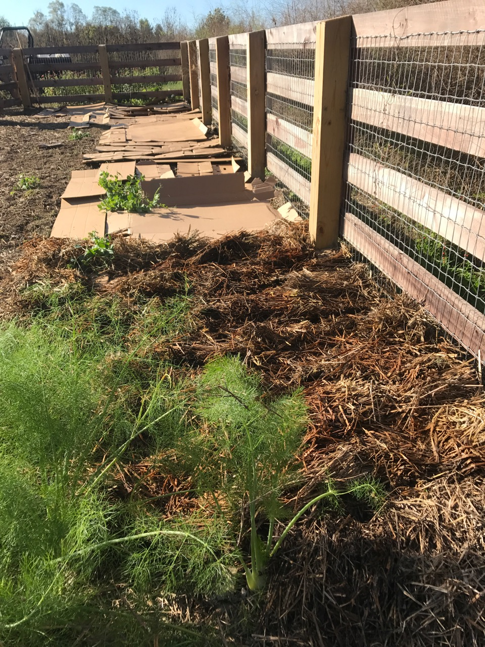 Farm Dover: Gardening Without Work – Ha!