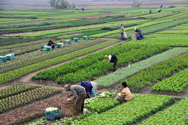 Sistem Pertanian Organik Yang Ramah Lingkungan Pengertian Pertanian
