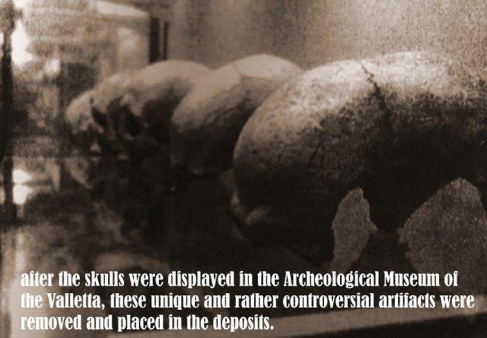 Los cráneos alargados de Hipogeo fueron expuestos en el Museo de la Valletta