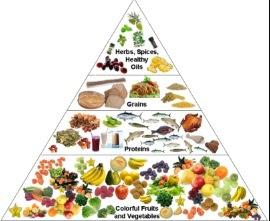 Gizi Makanan