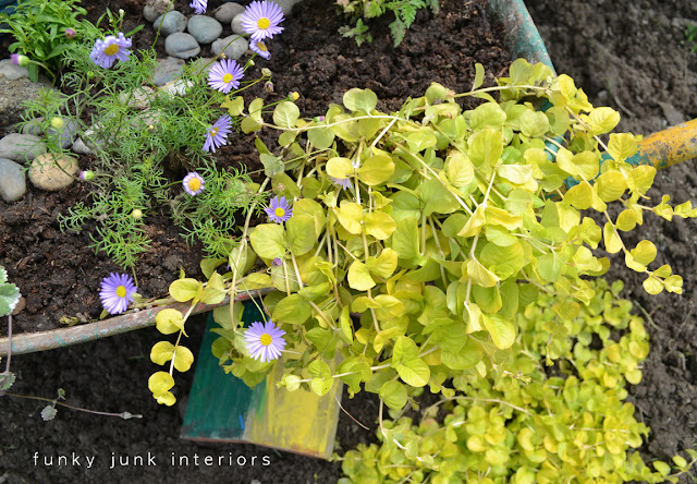 hanging basket plants spilling out of the sides of a summer flower filled wheelbarrow