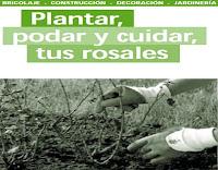 plantar, podar y cuidar tus rosales