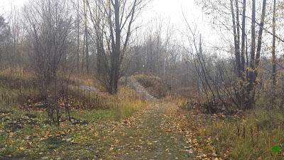 las, zarośla, jesień, jesienne zdjęcia