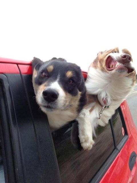 17 khoảnh khắc vô duyên không hề nhẹ của những chú chó