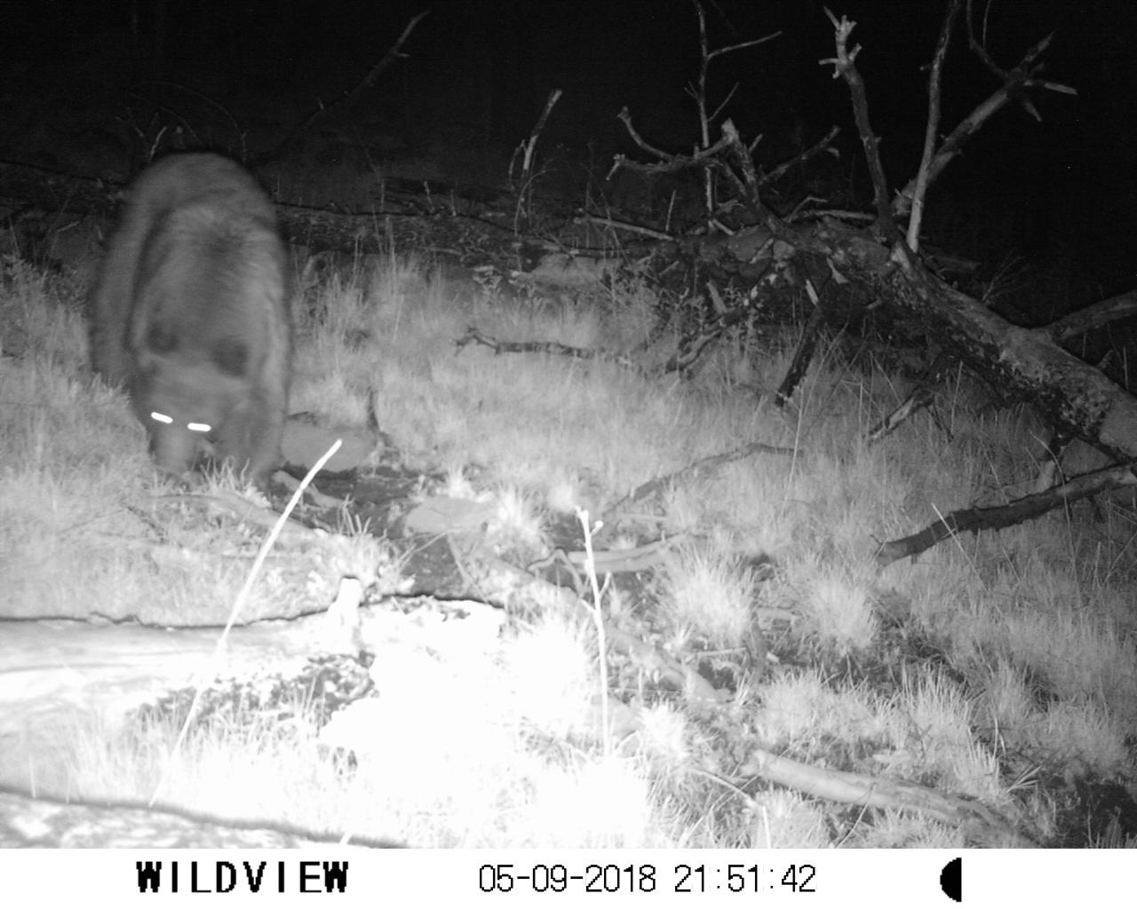 Southern Rockies Nature Blog: 2018