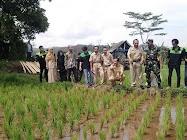 Babinsa dan BPP subah ajak petani tanam padi dengan cara Haston